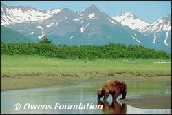Please help us save Idaho's few remaining Grizzly Bears.