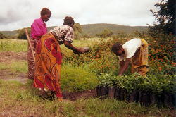 Village women working with agroforestry project funded by Harvest Help.
